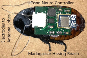 10 4 cockroach